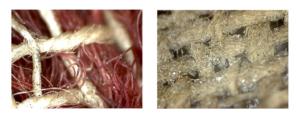 Zwei Gewebefotos mit einem Digitalmikroskop gemacht_Auf der linken Seite sind rote und weiße Fasern in einem leicht verwirrtem Flechtmuster-Leinwandbindung-zu erkennen_Auf dem rechten Bild ist die Nahaufnahme eines Leinwandgewebes in cremeweiß zu erkennen_Die Fasern liegen sehr gerade ausgerichtet